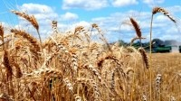 Indonesia to become a top 3 wheat importer in next five years