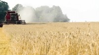 Victorian grains to reap long-term research benefits